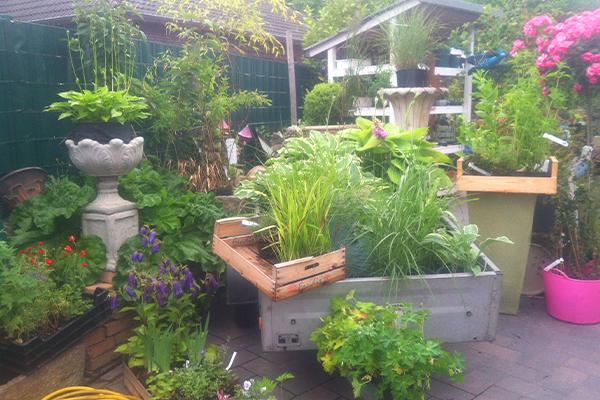 Gartenplanung individuelle Gartenberatung Ostfriesland